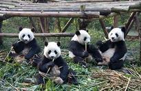 Accounting roadblock keeps ADB, IFC away from Pandas
