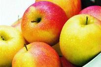Tribal women transform Kanker into custard apple production hub