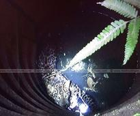 Caught on camera: Leopard falls into well in Wayanad; Rescue efforts on