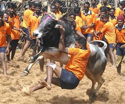 It can't be legal only because it's centuries old: SC on Jallikattu