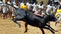 Tamil Nadu: Ministers hold talks with pro-Jallikattu protestors
