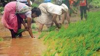 Farmers want Gujarat govt to address price issues