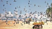 BMC rolls-out plans of theme-based beautification of beaches