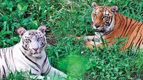 Delhi Zoo helps animals battle winter chills