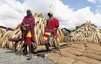 Kenya to torch ivory stockpile worth $100m