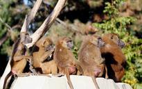Paris zoo evacuated after 52 baboons escape enclosure