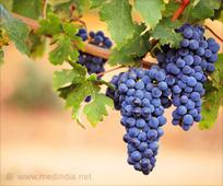 Grape Compounds Could be the New Treatment for Colon Cancer