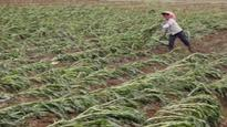 Kharif crop in 10,000 hectares affected in 5 flood-hit states