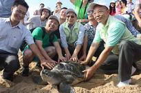 Hope blossoms for endangered turtles
