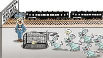 Efforts to get rid of rats at railway stations pay off, 10,000 killed