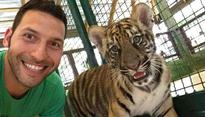 Say no to tiger selfies. They fund tiger abuse, fuel wildlife industry