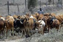 30 Fulani Herdsmen Killed By Boko Haram Militants In Borno