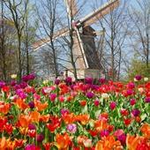 Visit Keukenhof Spring Gardens with Expa...