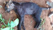Activists for strict action against wildlife killings