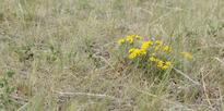 Further Canadian Prairie Regions Authorized for 2015 Livestock Tax Deferrals