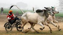 No bull race at Kila Raipur games; foreign visitors dejected