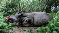 Rhino found dead with horn chopped off in Kaziranga National Park