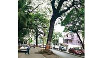 Prove trees on Cadell Road a threat: HC to cops, BMC