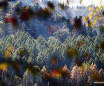 Autumn scenery in forest of Yichun, NE China