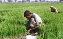 ICCI calls for bringing agriculture sector under tax net