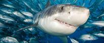 'Shark Week:' Stuff to Make Your Life Shark-Tastic!