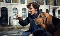 Benedict Cumberbatch Has a New Sidekick in First Sherlock Season 4 Photo