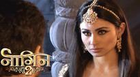 Naagin 2, 14th January 2017 full episode written update: Shivangi picks Naagmani