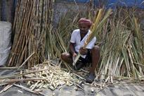 Exclusive: India to revoke compulsory sugar export order - officials
