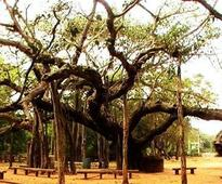 Tenth of tree per person in Ahmedabad