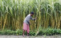 Sugar production declines 2 million tonnes in India during October-April