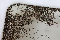 Bharatiya Vidya Bhavan Salt Lake larvae free: Civic authorities