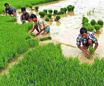 Uttar Pradesh clocks 250% rise in paddy procurement at 3.5 mn tonnes