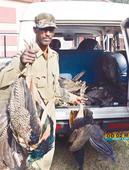 25 Peacocks Found Dead in Khurda Forest, Autopsy Report Awaited