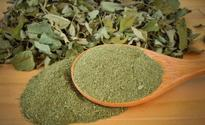 Who knows about the Moringa tree?