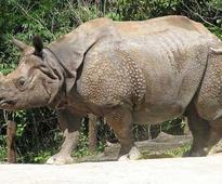 Rhino killed with AK 47 in Kaziranga National Park