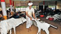 Bihar sets up its first shelter for cows