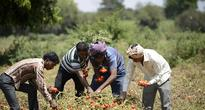 Obama Signs Global Food Security Act to Promote Global Farms Development