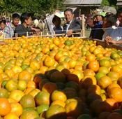 Manipur's Tamenglong gears up to host 12th edition of Orange Festival