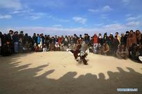 Afghan men watch cockfighting in Ghanzi