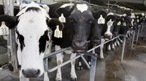 Fonterra leaves forecast milk payout unchanged
