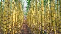 Mauritius wants to diversify sugar biz; inks pact with India