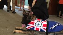 Queensland: Dog 'sacked' by police for being too friendly, gets new job at Governor's mansion
