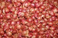 Price of small onions at Rs 100 a kilo