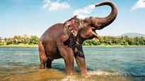 Elephant population study: 27,312 elephants across 23 states