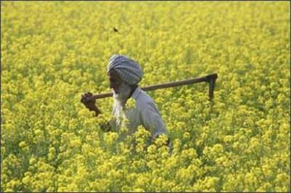 After UP and Maharashtra, Punjab announces loan waiver for farmers