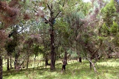 No govt deadline to implement long pending forest policy