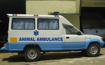 Free Ambulance Service For Animals Rolls Out In Navi Mumbai