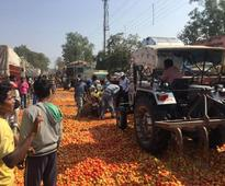 Tomato At 50 paise/Kg! A Windfall o...