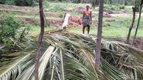 Elephant enters farm, destroys crops near Marayur