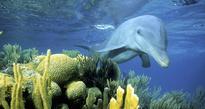 Update: Belize suspends oil exploration near threatened World Heritage site